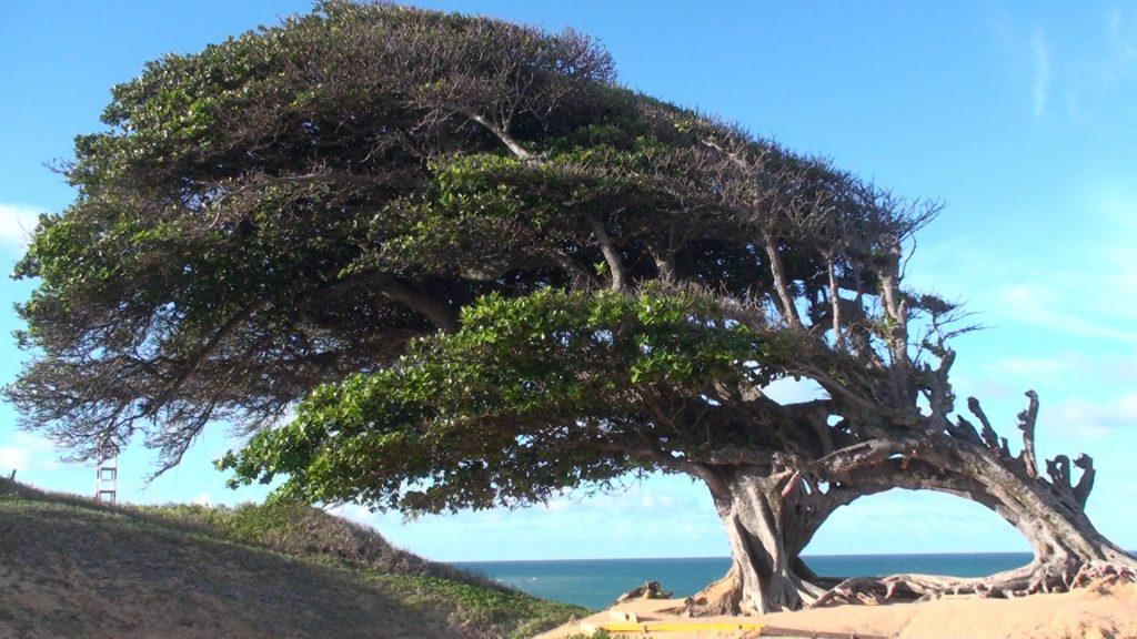 O que fazer em Natal, RN. Foto: Travel Brazil