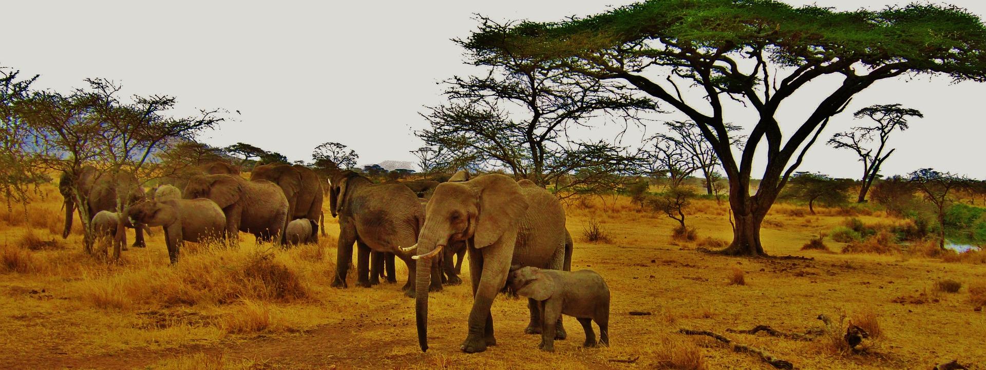 Tanzania e quenia africa travel brazil